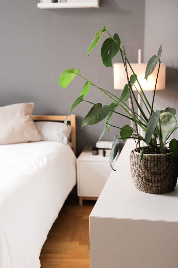 vegan mattress